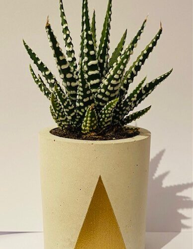 small round concrete planter with gold triangle detail